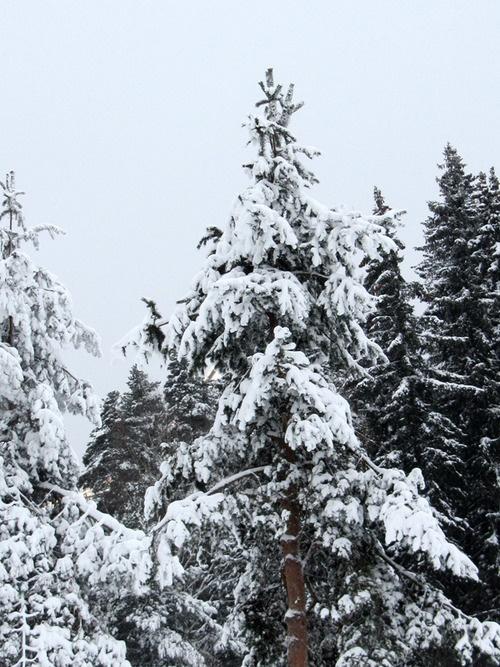 Snow, photographer Taina Tervonen, #snow