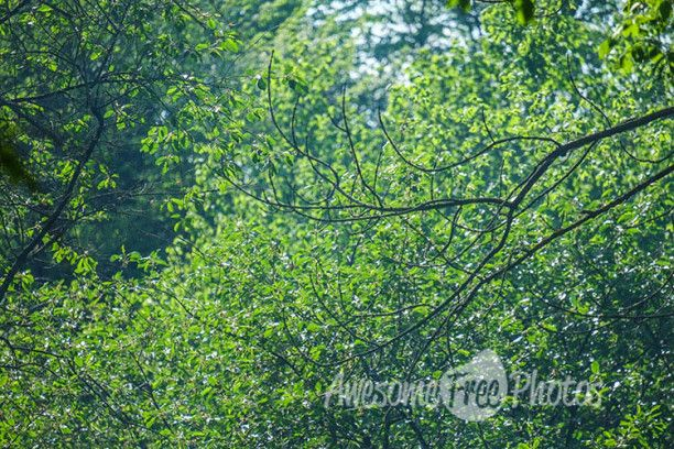 85-awesomefreephotos-forest-leaves-green-nature-750