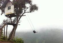 фото дерево с качелями: 32 тыс изображений найдено в Яндекс.Картинках