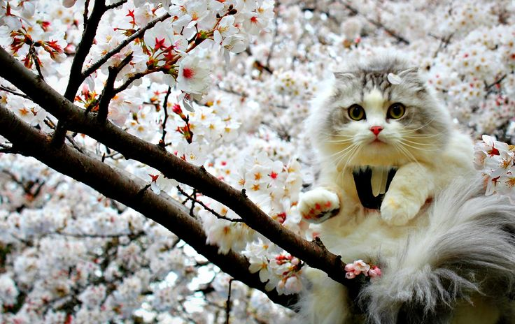 spring animal wallpapers: 156 Best Images About Spring Beauty On Pinterest