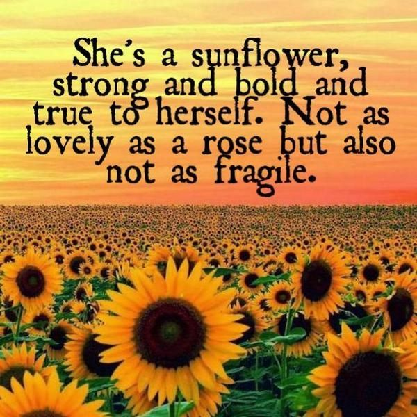❤️ she's a sunflower, strong and bold and true to herself. Not as lovely as a rose, but also not as fragile. ❤️