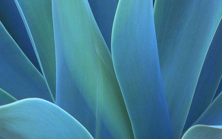 Colors-4Life.com - Agave