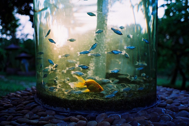 Outdoor fish tank aquarium decor pinterest fish for Outside fish tank