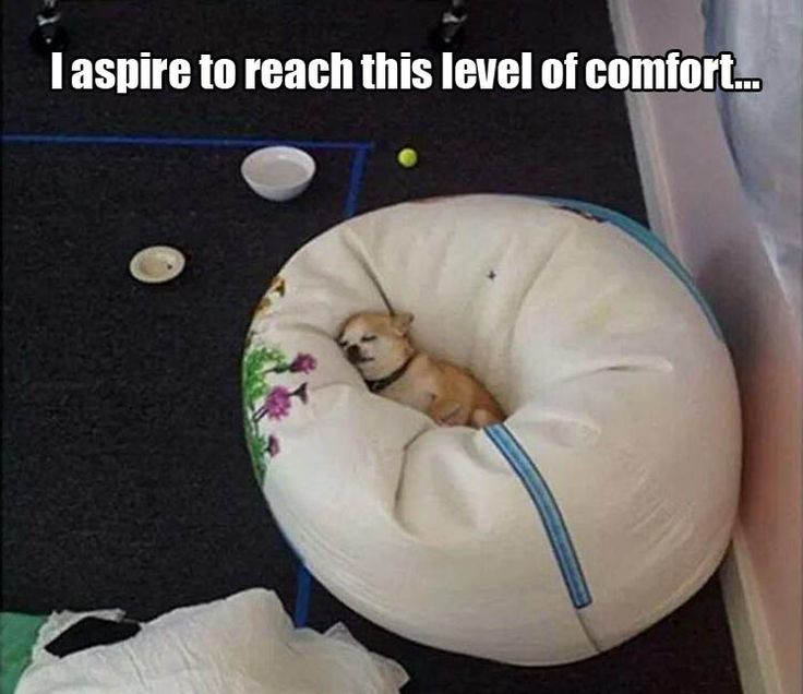 Best Funny Funny Funny Images On Pinterest Adorable - 28 hilarious random acts of laziness 4 cracked me up