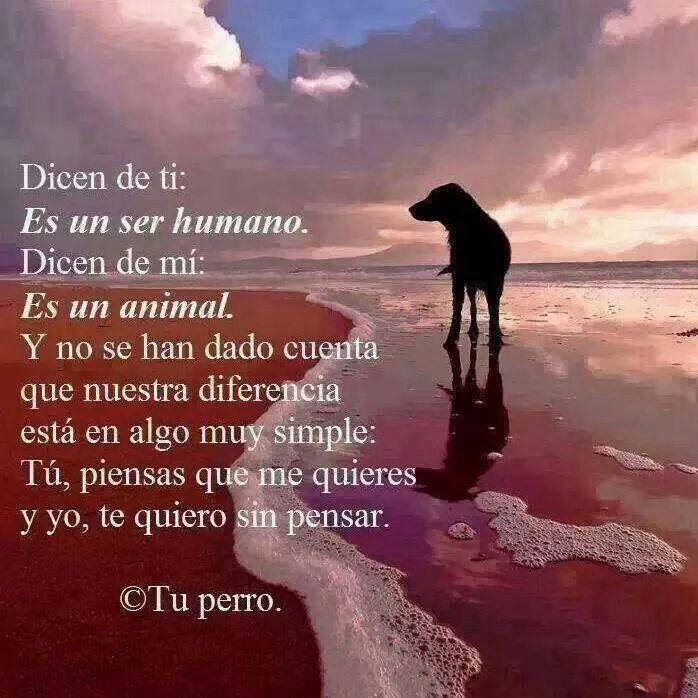 Amor Animal                                                                                                                                                                                 Más