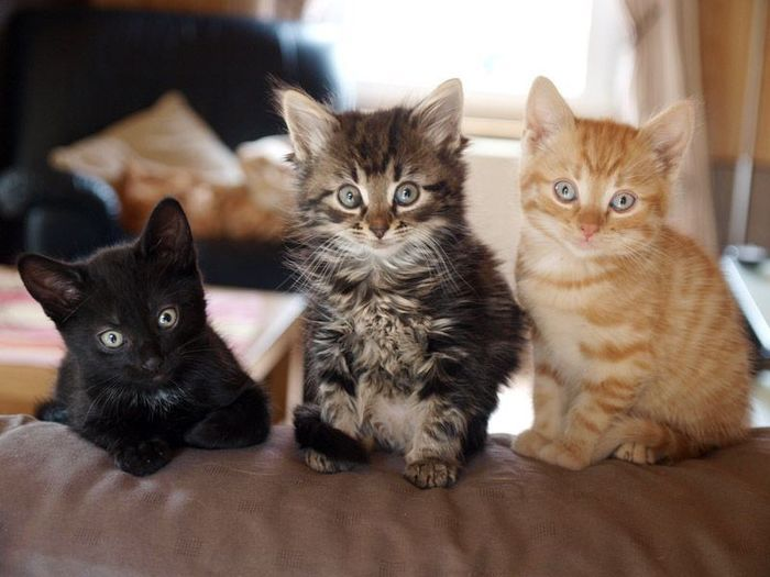 OMG!!! I have three cats that and they are a brown fuzzy tabby, a black cat with some white and a orange tabby!!