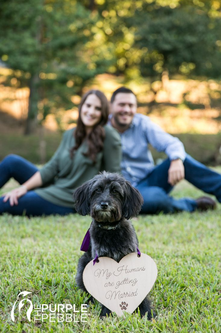 Fur Baby Parents Getting Married Dogs In Engagement Sessions Dallas Engagement Session Turtle Creek Engagement Downtown Dallas Getting Married Engagement