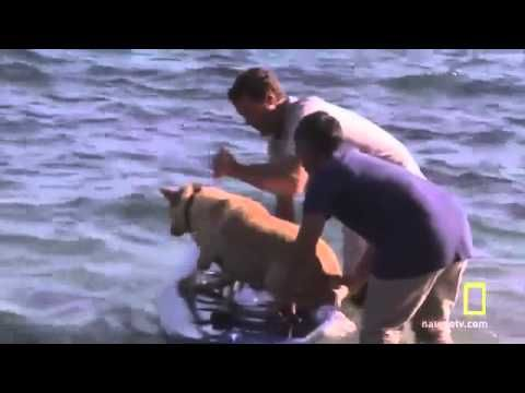 ▶ Tahoe SUP featured on Dog Whisperer episode - YouTube