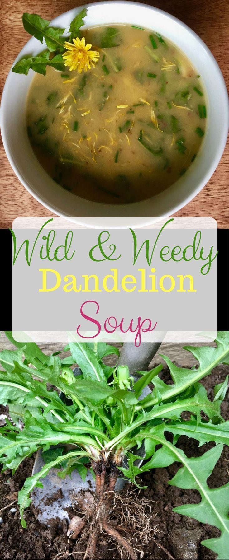 Wild & Weedy Dandelion Soup