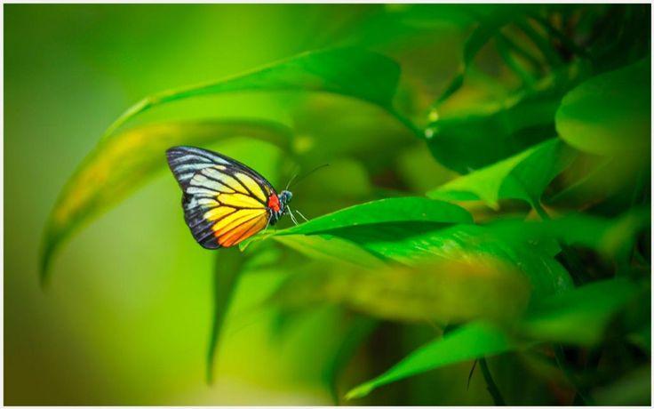 Green Leaves Butterfly Wallpaper | green leaves butterfly wallpaper 1080p, green leaves butterfly wallpaper desktop, green leaves butterfly wallpaper hd, green leaves butterfly wallpaper iphone