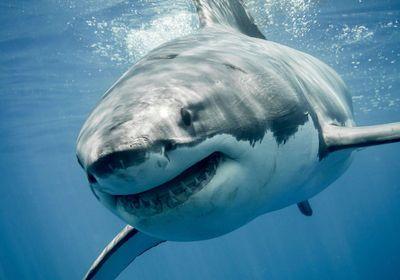 Aahhhhh! 5 Scary Shark Myths Busted.