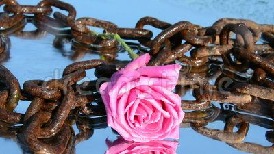 An isolated pink rose in chains, still, in silence, under the flowing little waves, symbol of freedom.