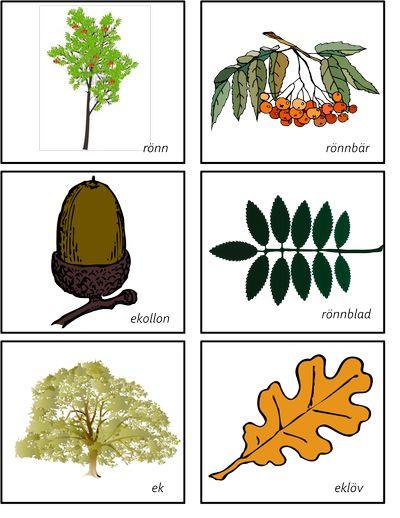 Memory svenska träd
