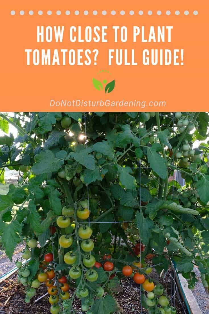 How Close To Plant Tomatoes Important Tips And Tricks Do Not Disturb Gardening Tomato Plants Plants Fertilizer For Plants