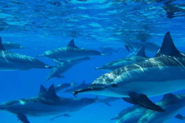 #egypt #tourism #redsea #sea #dolphin #beauty