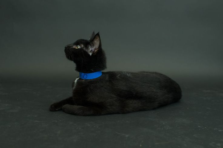 I Photograph Black Shelter Cats Because They're The Last To Get Adopted And First To Be Euthanized | Bored Panda