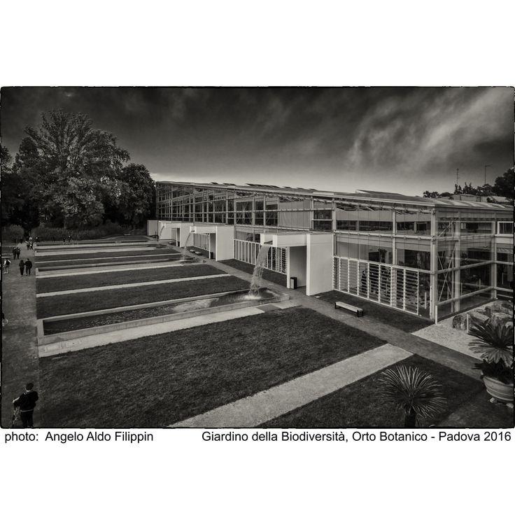 https://flic.kr/p/Ktrx2j | Il Giardino della Biodiversità, Orto Botanico Università di Padova fondato nel 1545 - Padova 2016