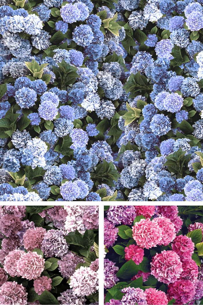 The abundance and wonderful colours of hydrangeas have always been a joy and remind me so much of summer.  Hydrangeas is available in three different colourways and can be purchased by the metre and look wonderful on everything from upholstery to  cushions, mannequins and lampshades.