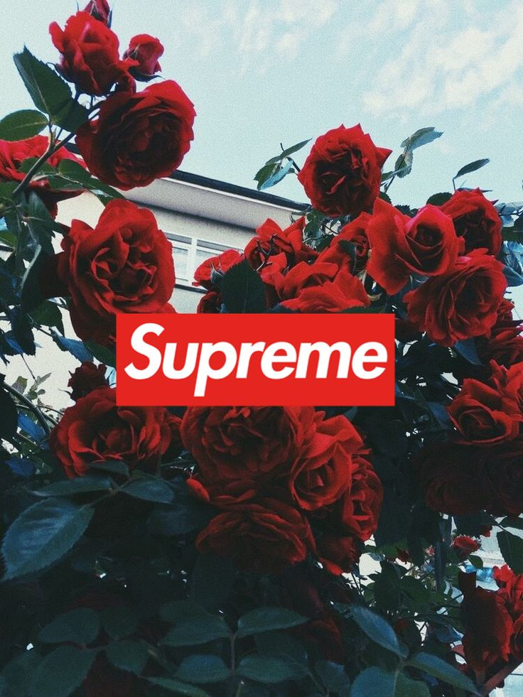 Supreme rose wallpaper for iPhone