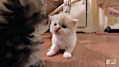 """petrichoriousparalian: """"mizufae:"""" hallo wenn du verwirrt oder unbehaglich bist …   – cats cartoon"""