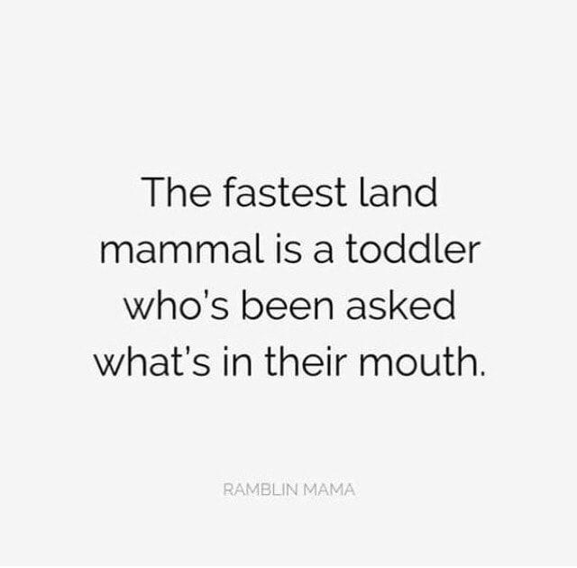 Beste moedermemes + grappig ouderschap