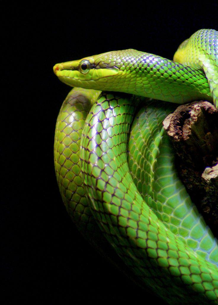 Snake at Berlin Zoo. Berlin, Germany