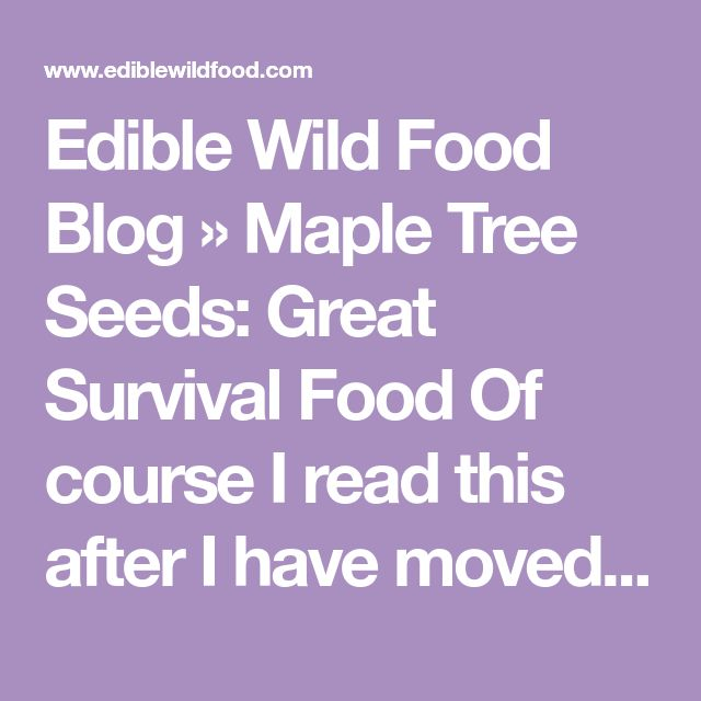 Edible Wild Food Blog » Maple Tree Seeds: Great Survival Food Of course I read this after I have moved away from a maple tree  that was the size of a four car garage and dropped seeds everywhere!