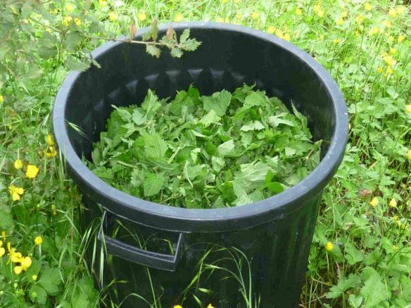 Purin d'ortie, recette et utilisation (activateur de compost!)