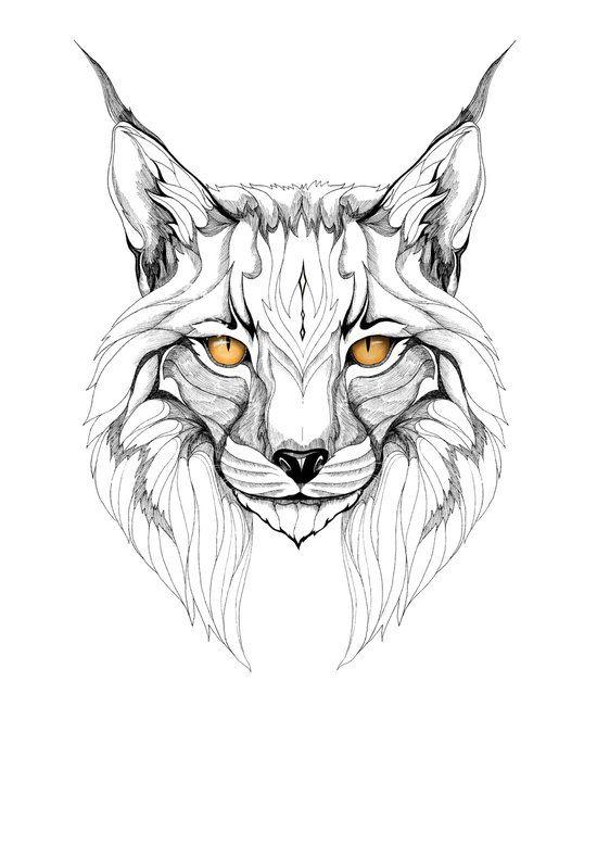 lynx graphic art                                                       …