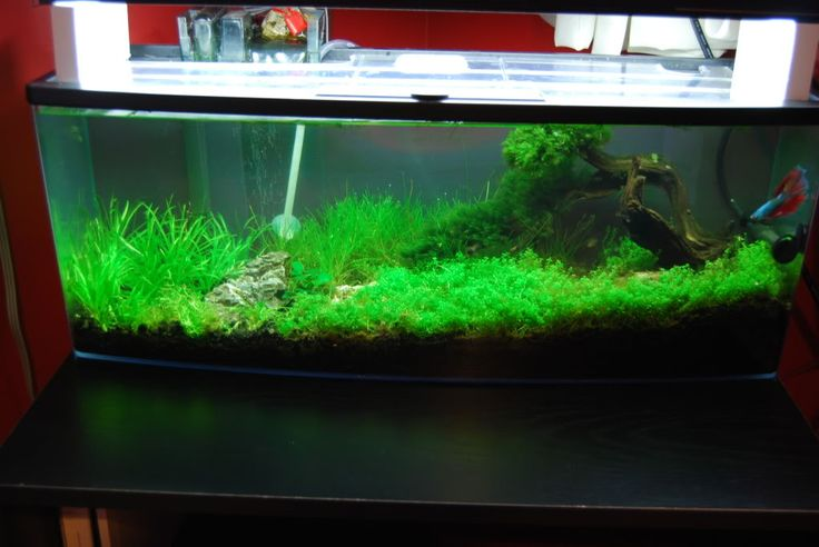 This scape is great tank 6 6 petco bookshelf filtration for Betta fish tanks petco