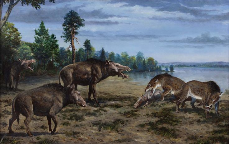 Entelodons intimidating Hyaenodon by Petr Modlitba ...