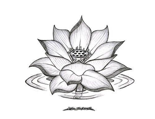 Dessin Fleur De Lotus Tattoo Affordable Tatouage Fleurs De Lotusart