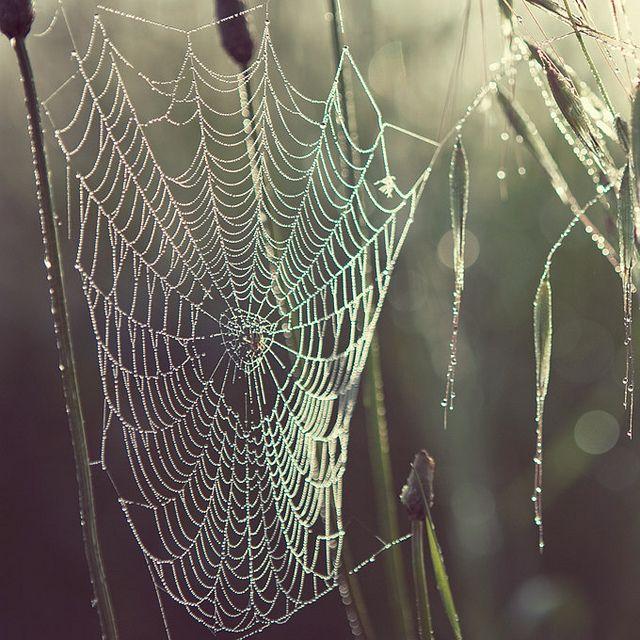 Dewdrops on delicate gossamer webs. Shot by Irene Suchoko