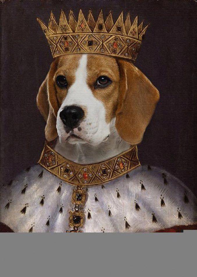 Собака в короне картинки