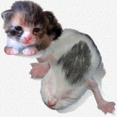 Hand Raising & Bottle Feeding Orphaned Kittens ~ best article on newborn kitten care that I've come across