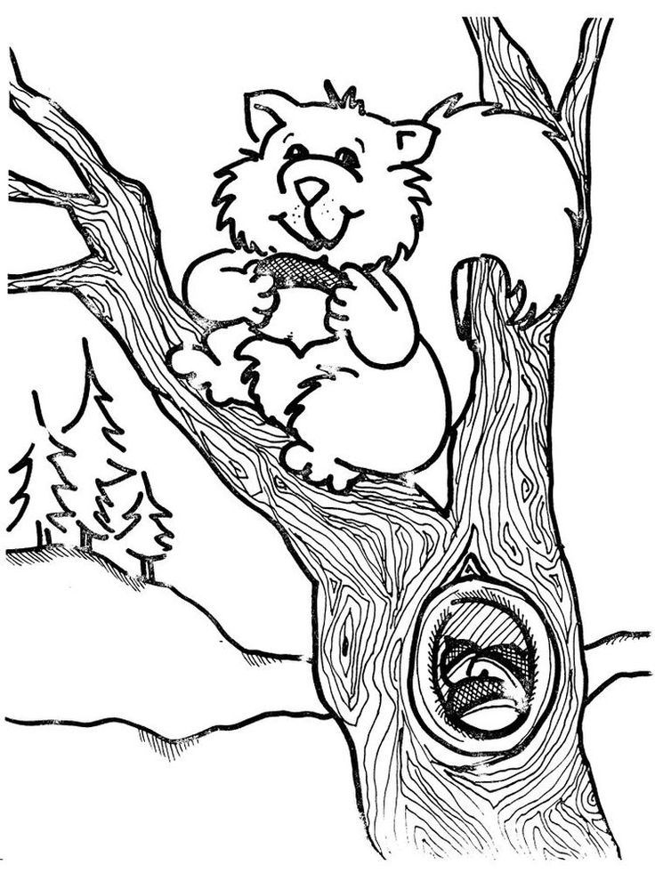 Squirrel Coloring Pages To Print