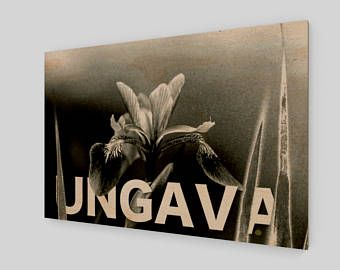 Collection Ungava: l'iris versicolore de la forêt boréale, symbole floral du Québec. Photographie sur film originale imprimée sur bois.