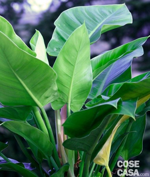 Oltre 25 fantastiche idee su piante da appartamento su pinterest - Perche si forma l umidita in casa ...