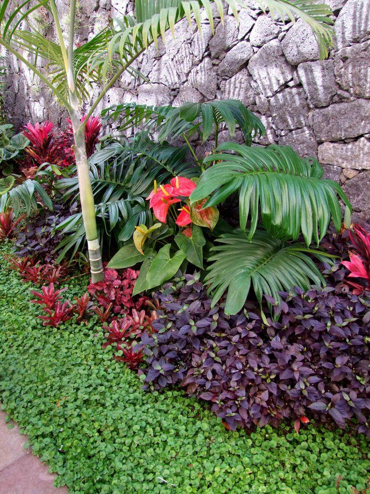 dypsis cabadae raphidophora decursiva anthurium small red brom and dichondra tropical landscapingtropical plantstropical