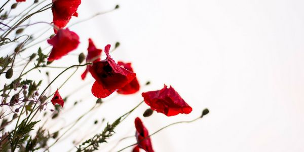 8 Books for Anzac Day - Reading Australia