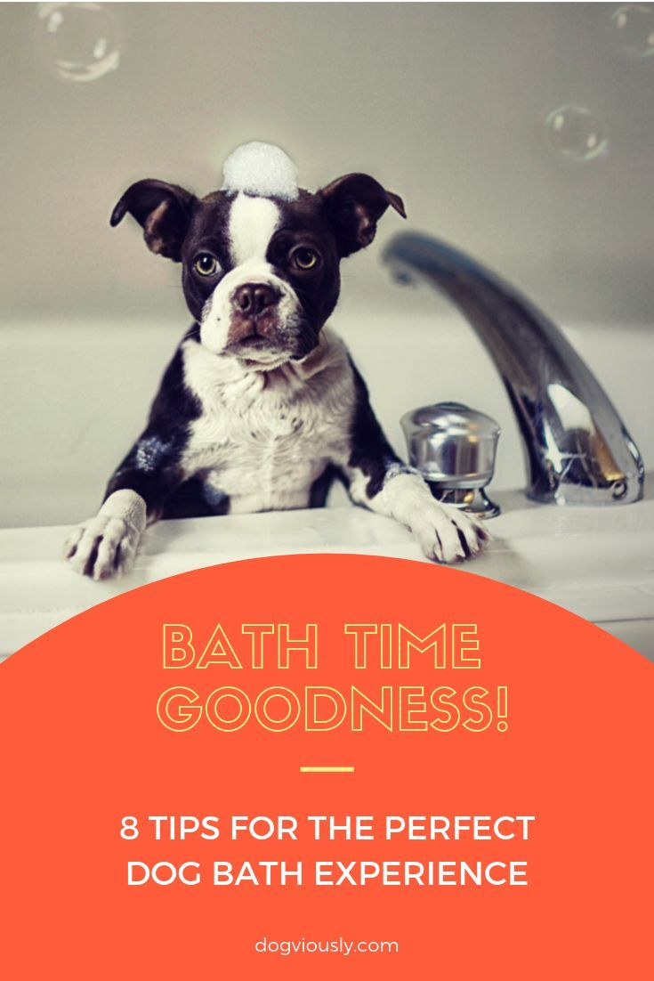 8 Ways To Give Your Pup A Perfect Bath Experience Puppy Grooming
