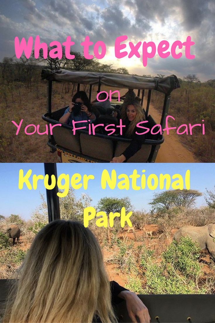 Everything you need to know about going on your first safari in Africa!
