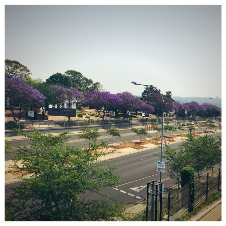 #goodinJoburg I love our #jacaranda season!