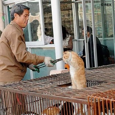 Cat's don't escape the terrible cruelty that goes with this meat trade either.