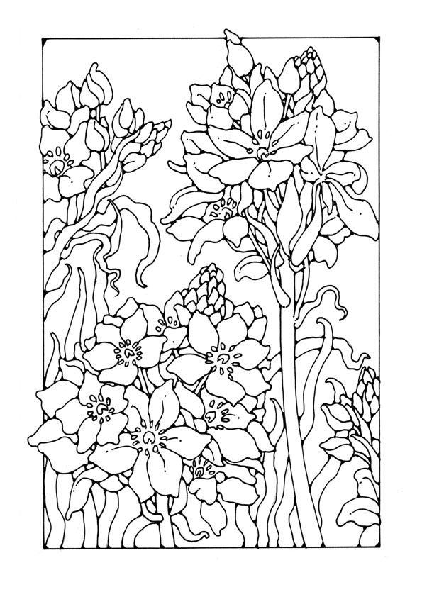http://www.dandi.me.uk/hi-res/images/pics-flowers/flowers/liliy.jpg