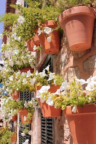 Flowers in Valldemossa, mallorca