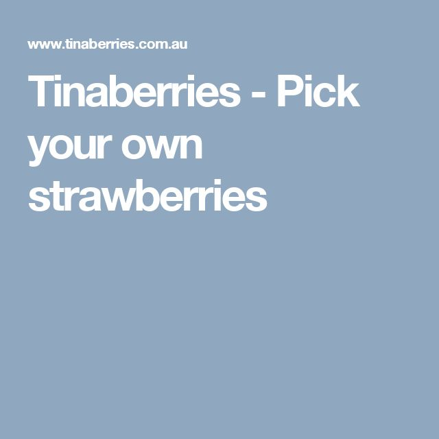Tinaberries - Pick your own strawberries