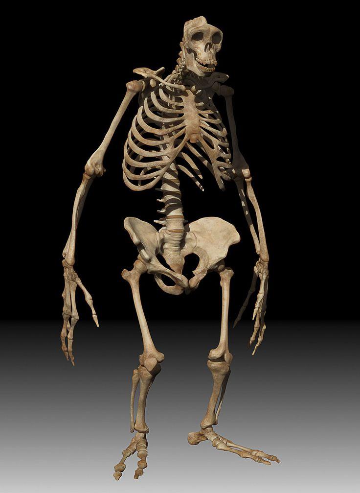 332 best animal skeletons images on pinterest | animal skeletons, Skeleton