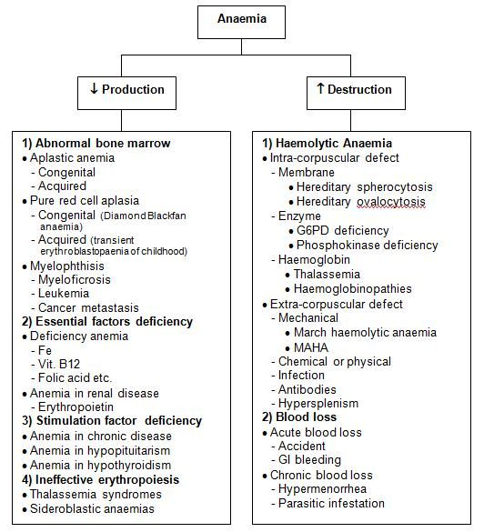 • Classification of Hemolytic Anemia: - Google Search