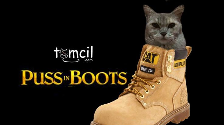 Puss in Boots | Storytelling for Children